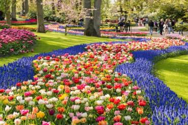 2. Keukenhof Gardens- Amsterdam