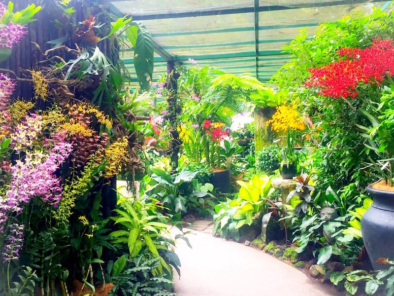 jardim botanico- foto em Singapura