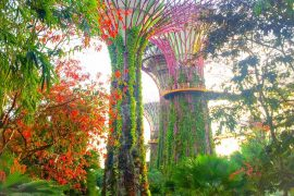 gardens by the bay- foto em singapura