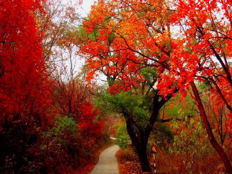 Fragrant Hills- atrações imperiais de Pequim