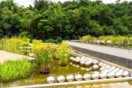 Jardim de Narciso- Inhotim